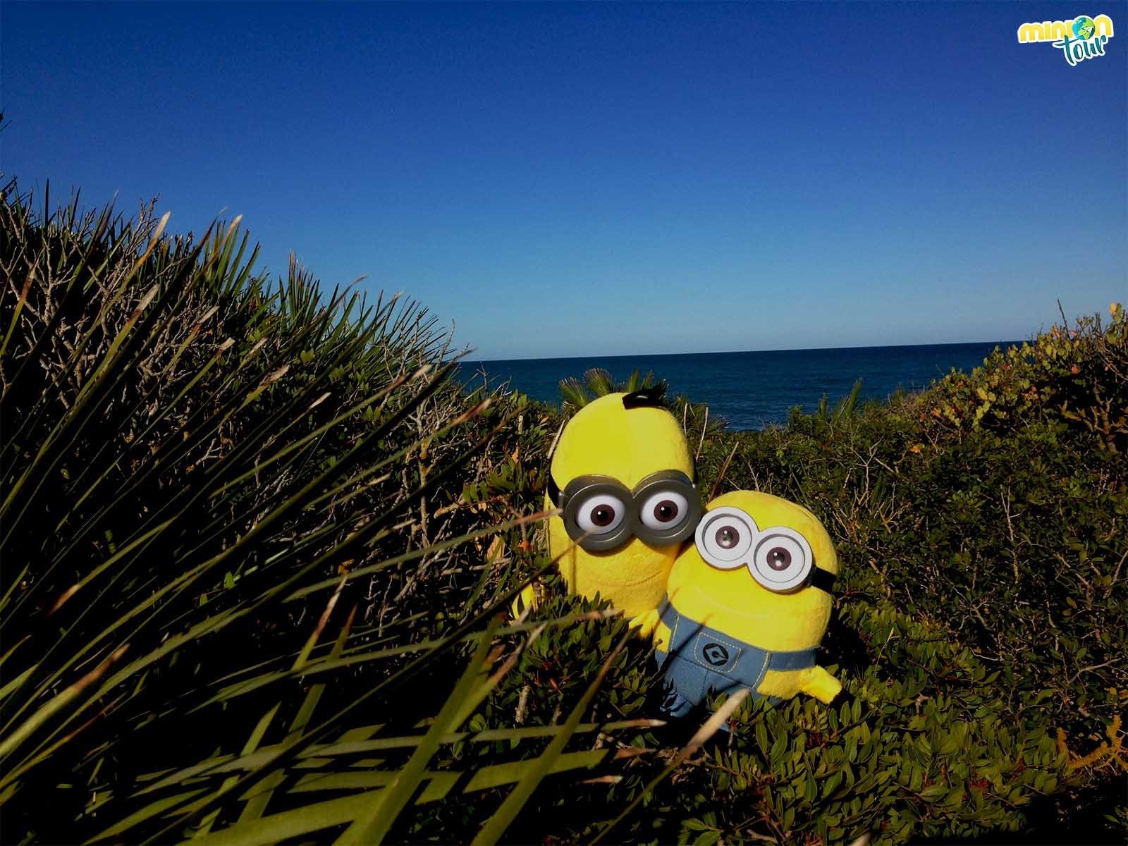 2 Minions buscando una playa desierta