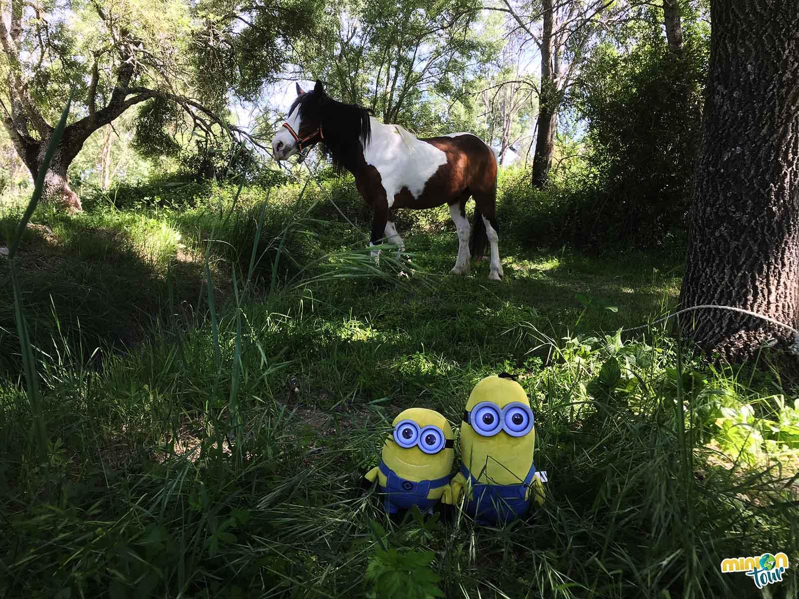 Un caballo y 2 Minions en Escalona