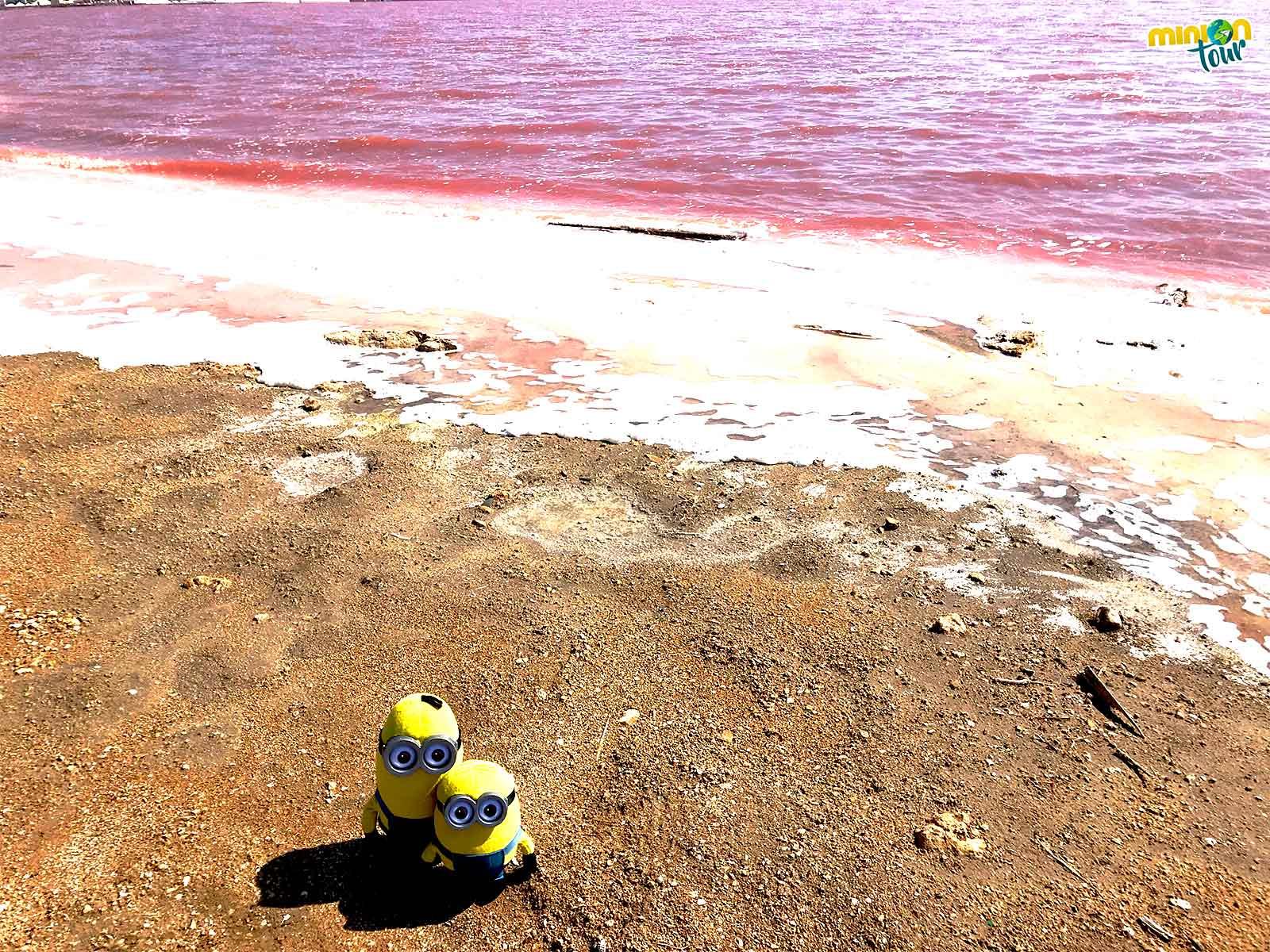 2 Minions en la laguna rosa de Torrevieja
