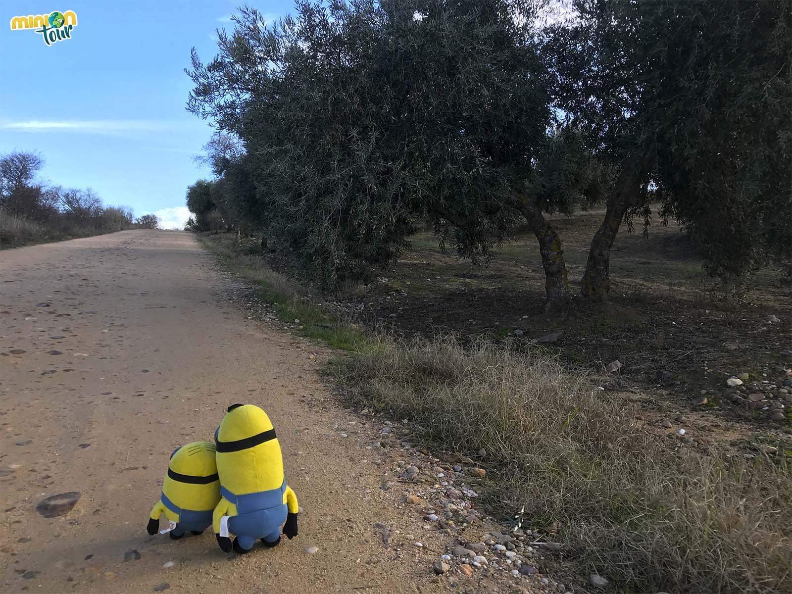 Camino de las Barrancas de Burujón
