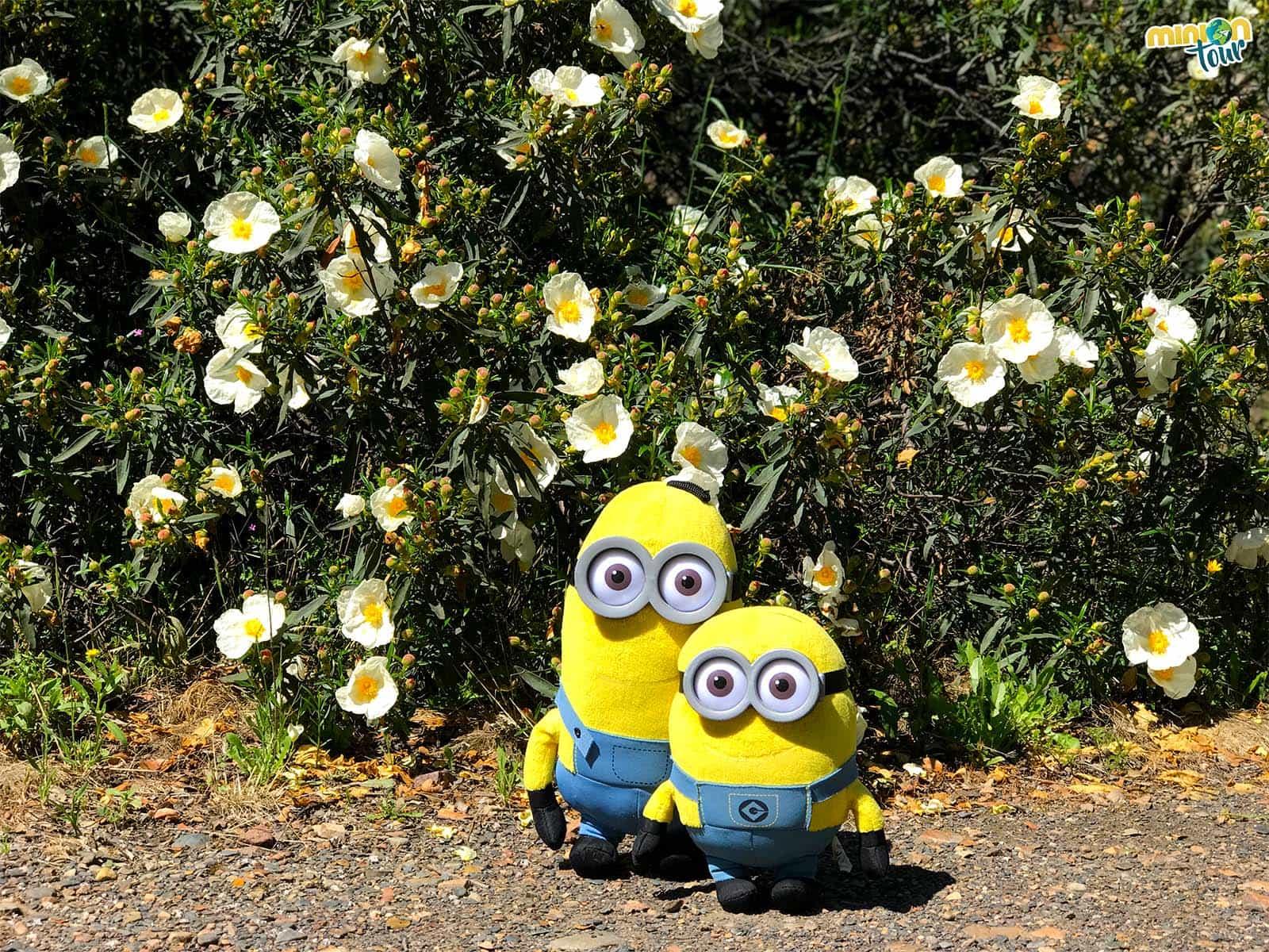 Flores en la ruta