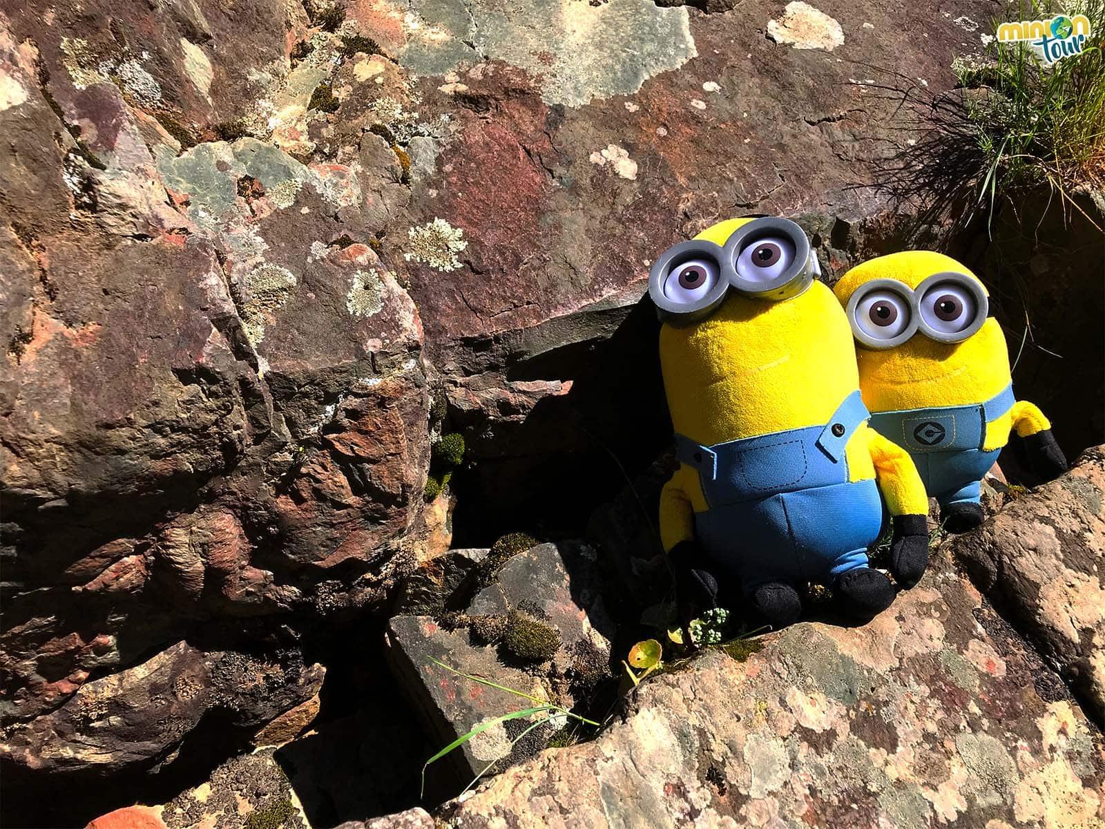 Hemos encontrado fósiles