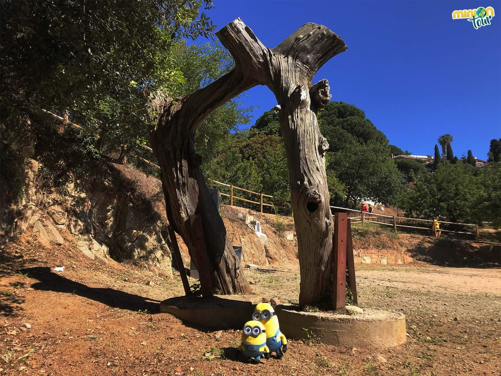 El famoso pino de la Cisa