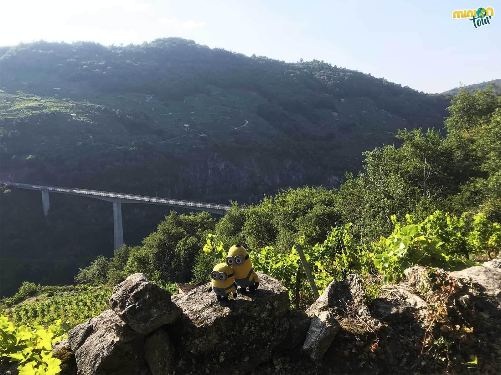 Vistas de la Ribeira Sacra en nuestro camino a Santo Estevo de Ribas de Miño