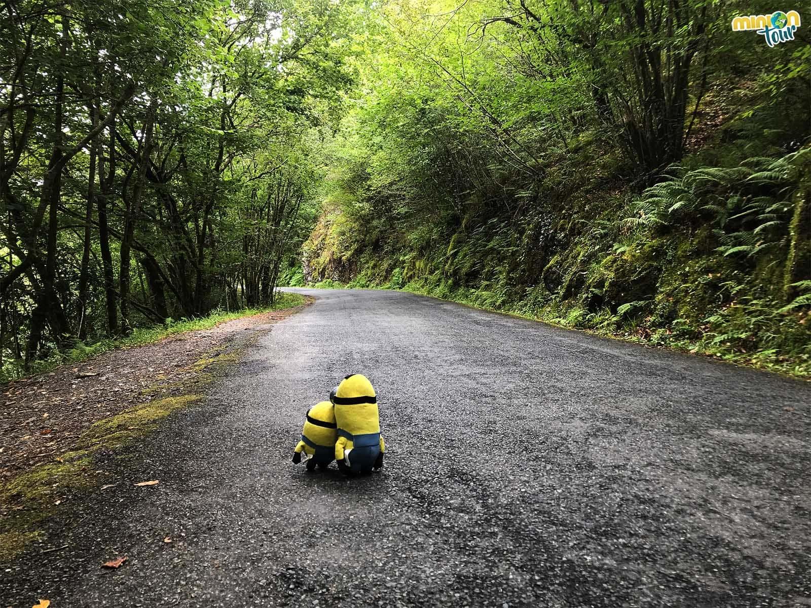 Camino en las Fragas do Eume