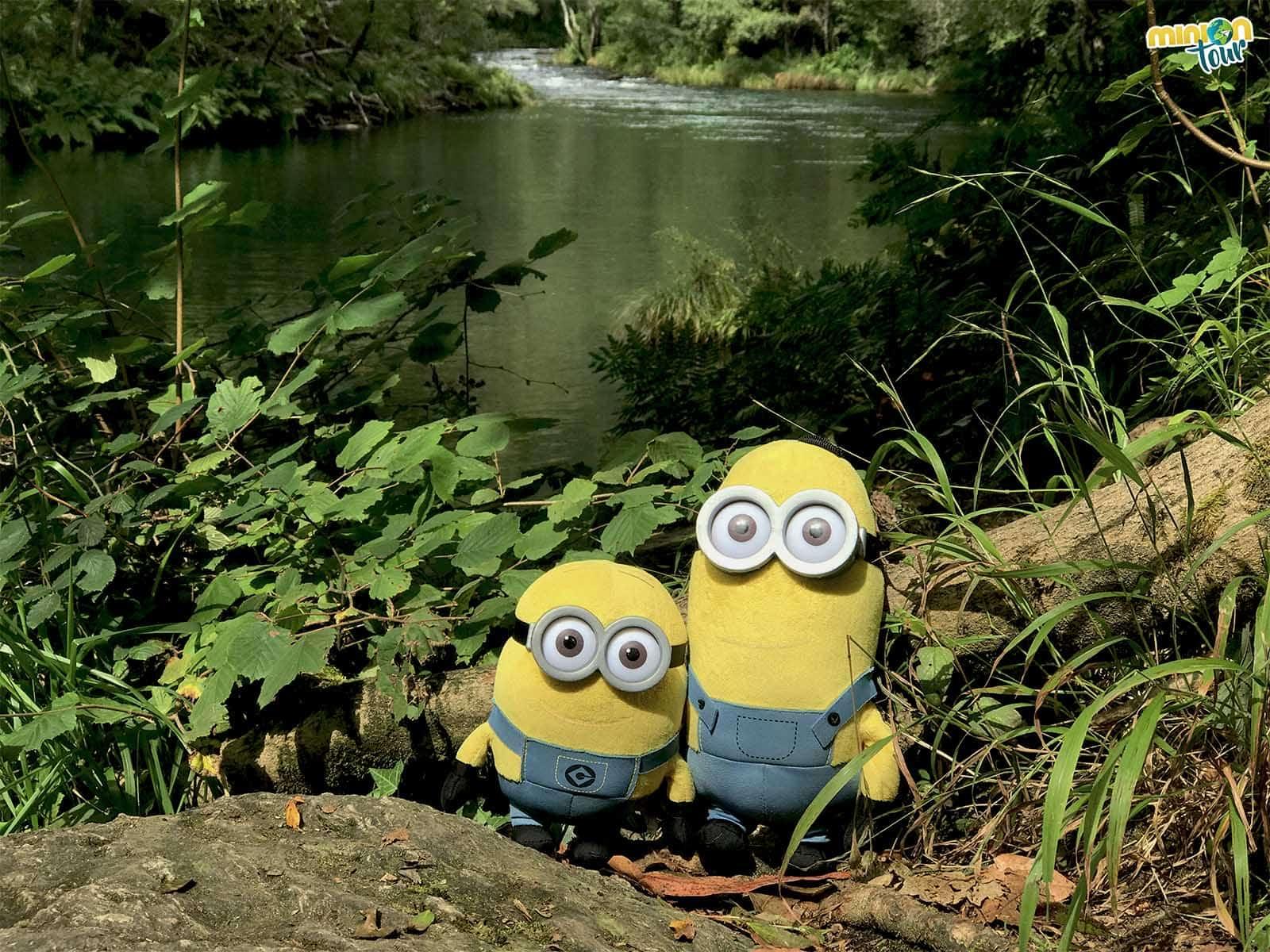 El río Eume