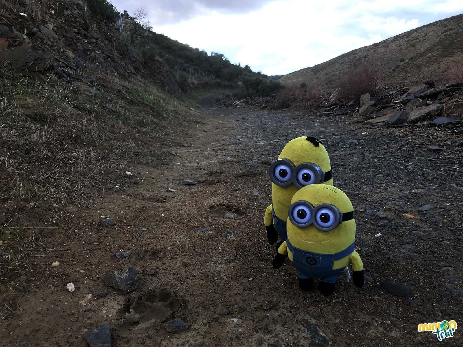 Huellas en el sendero