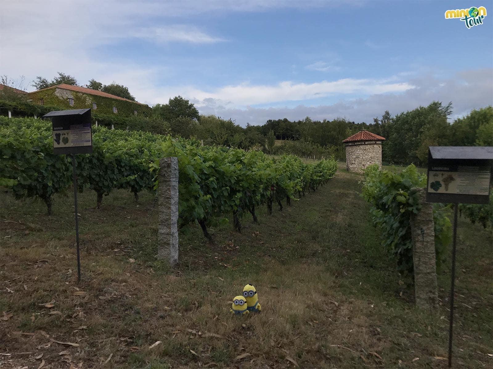 Rodeados de viñas