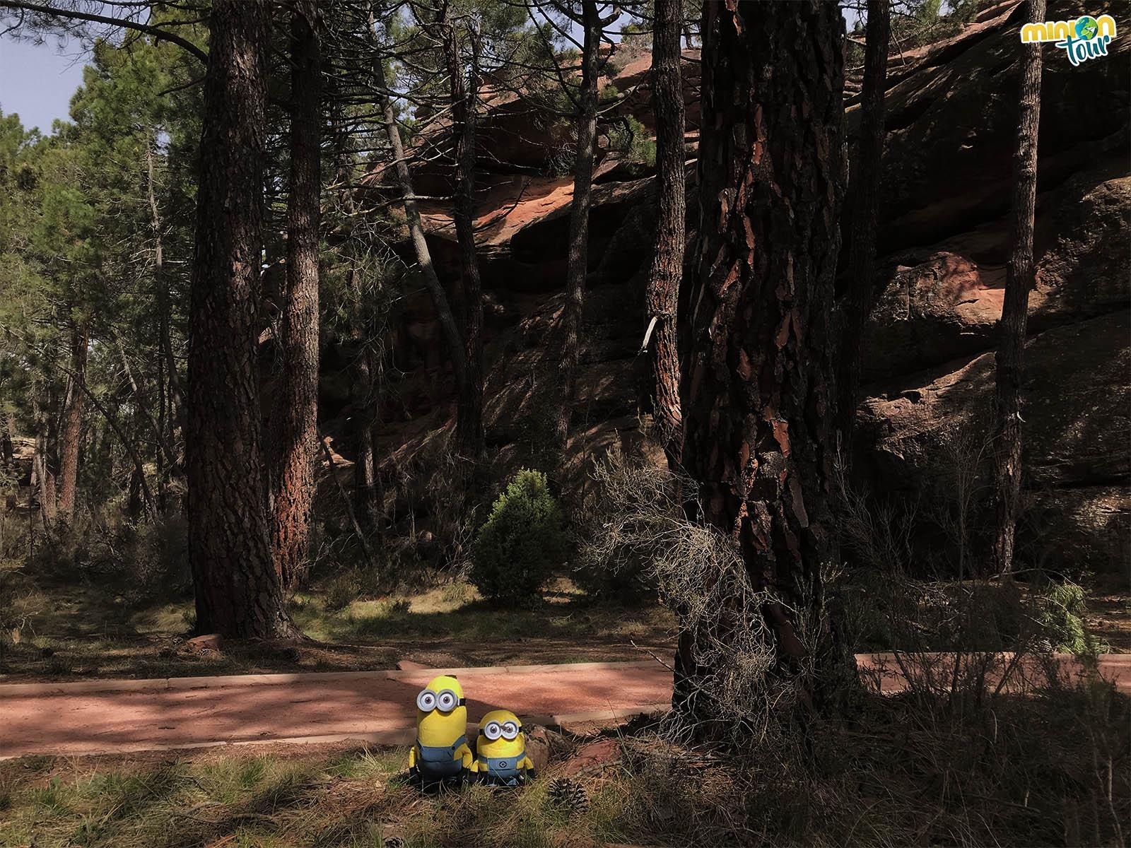Paseando por el pinar