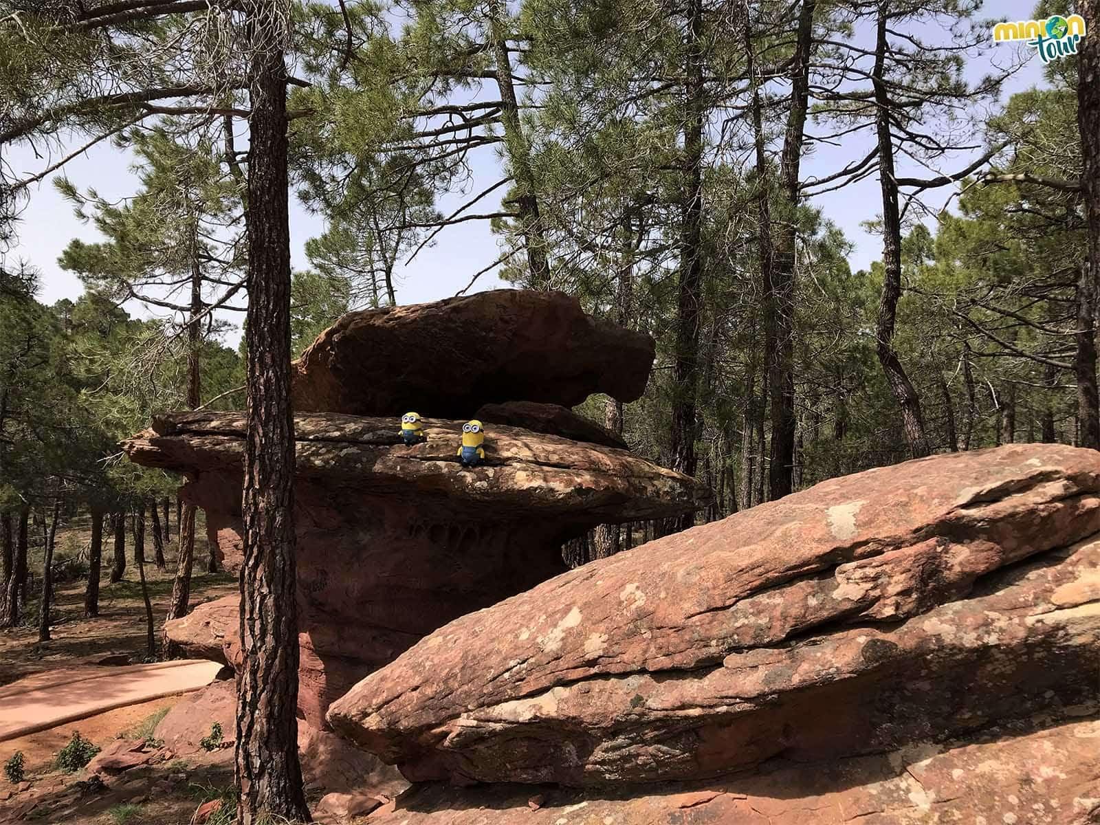 Explorando el pinar