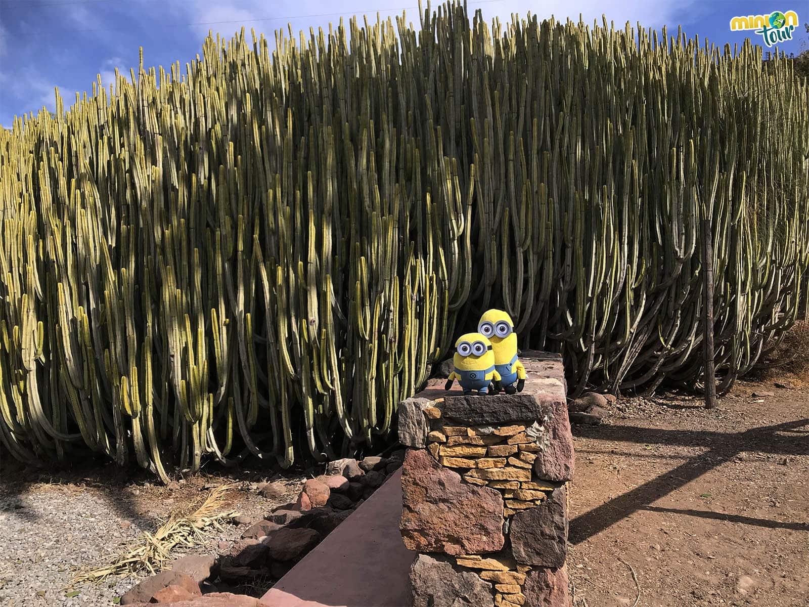Qué ver en Mogán y La Aldea de San Nicolás. Día 2 en Gran Canaria