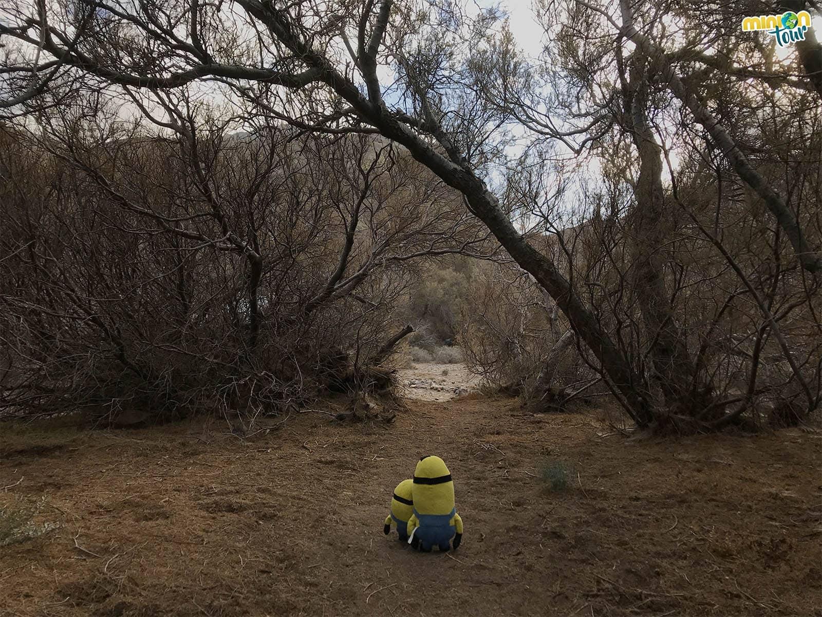 Sendero en el Humedal de La Maciega