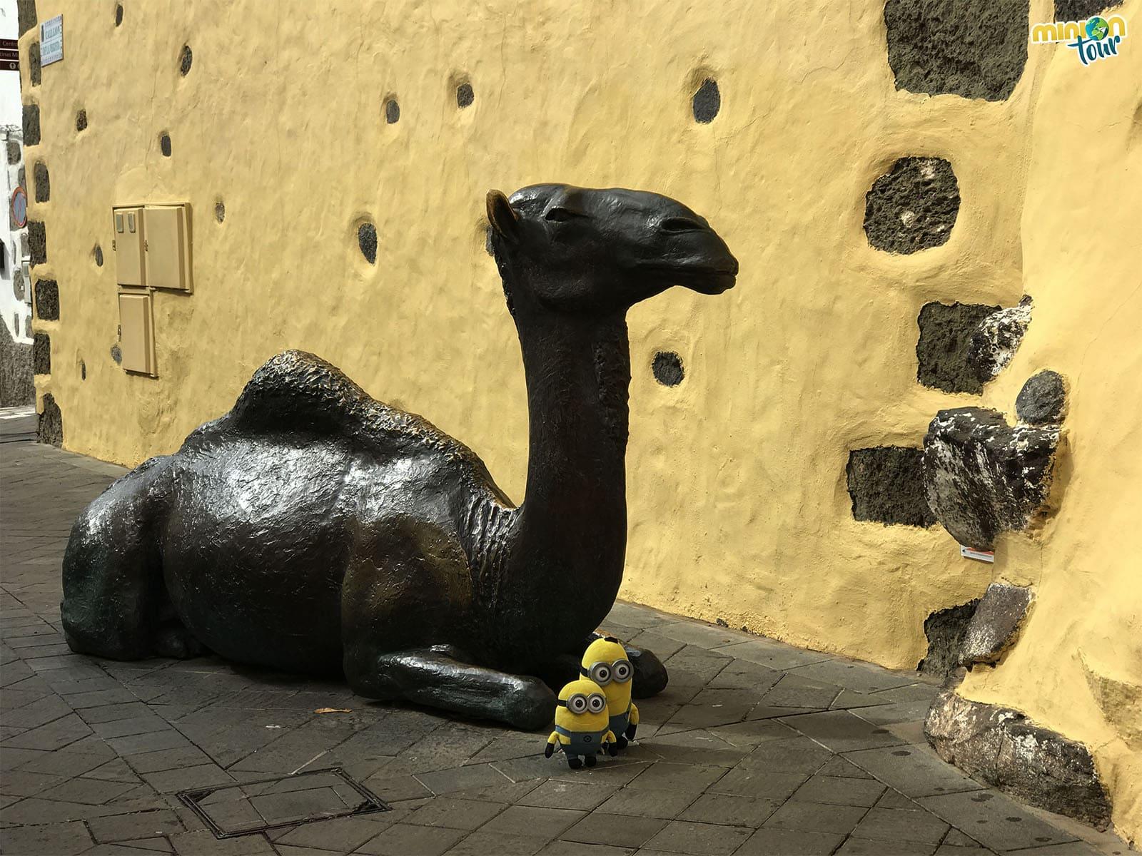 Un camello en las calles de Agüimes