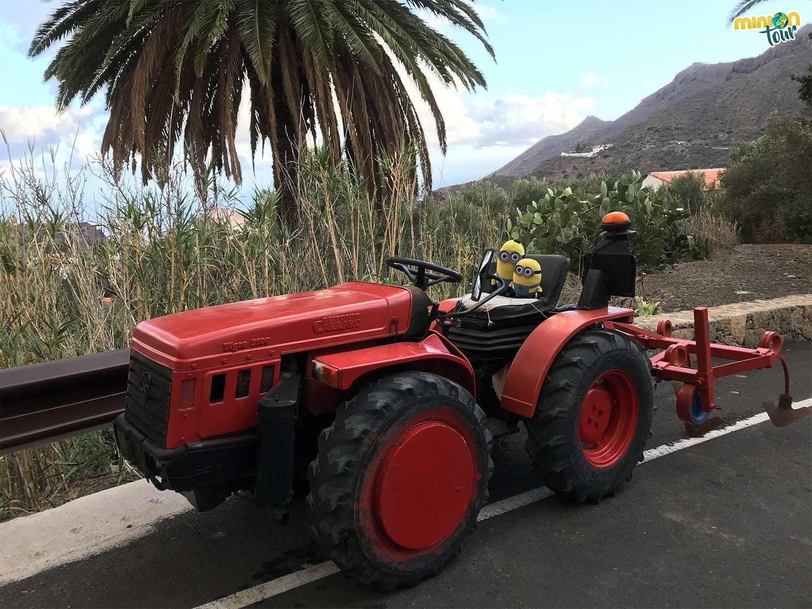 Subidos a un tractor en Temisas