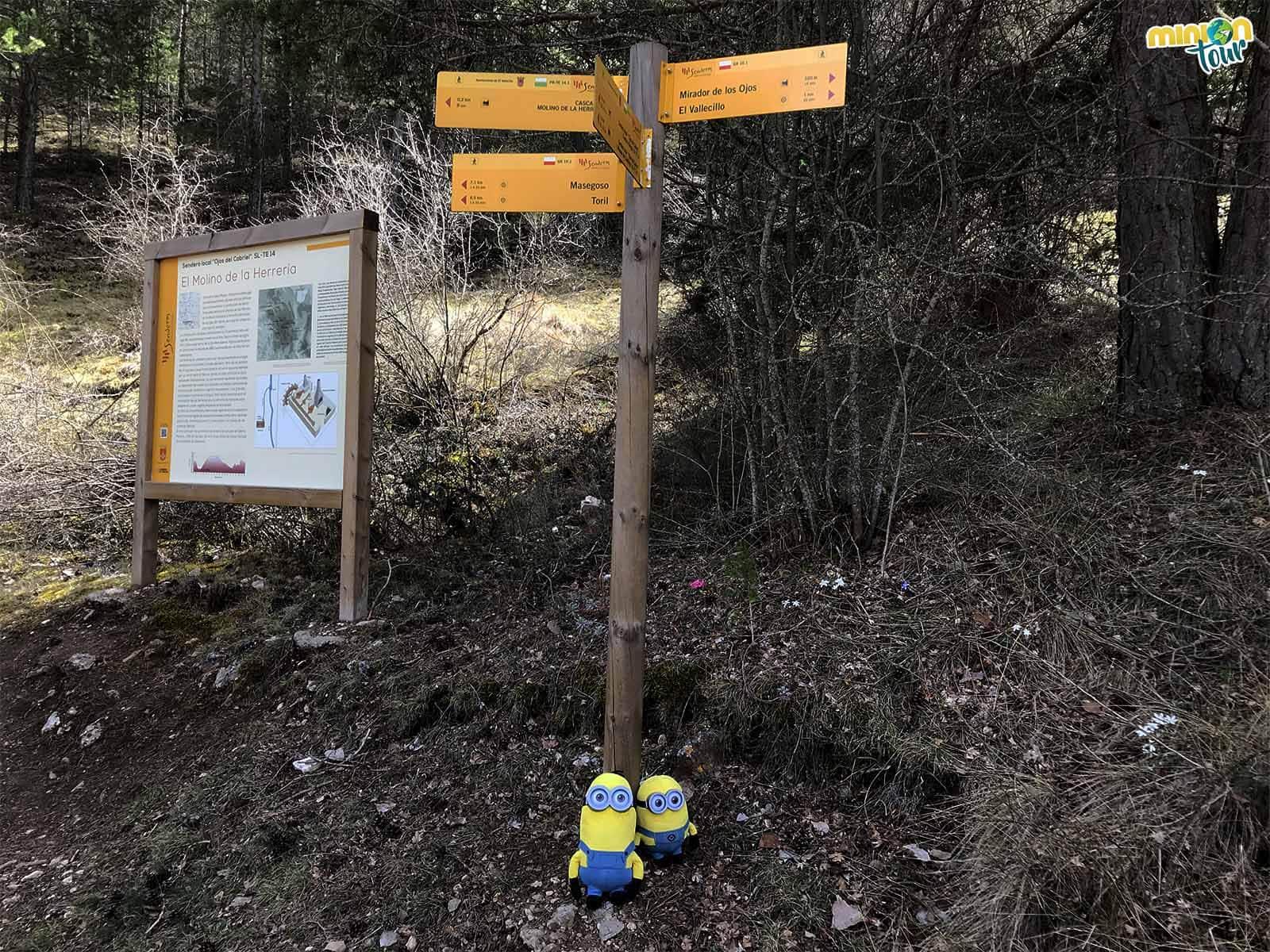 2 Minions decidiendo el camino a seguir