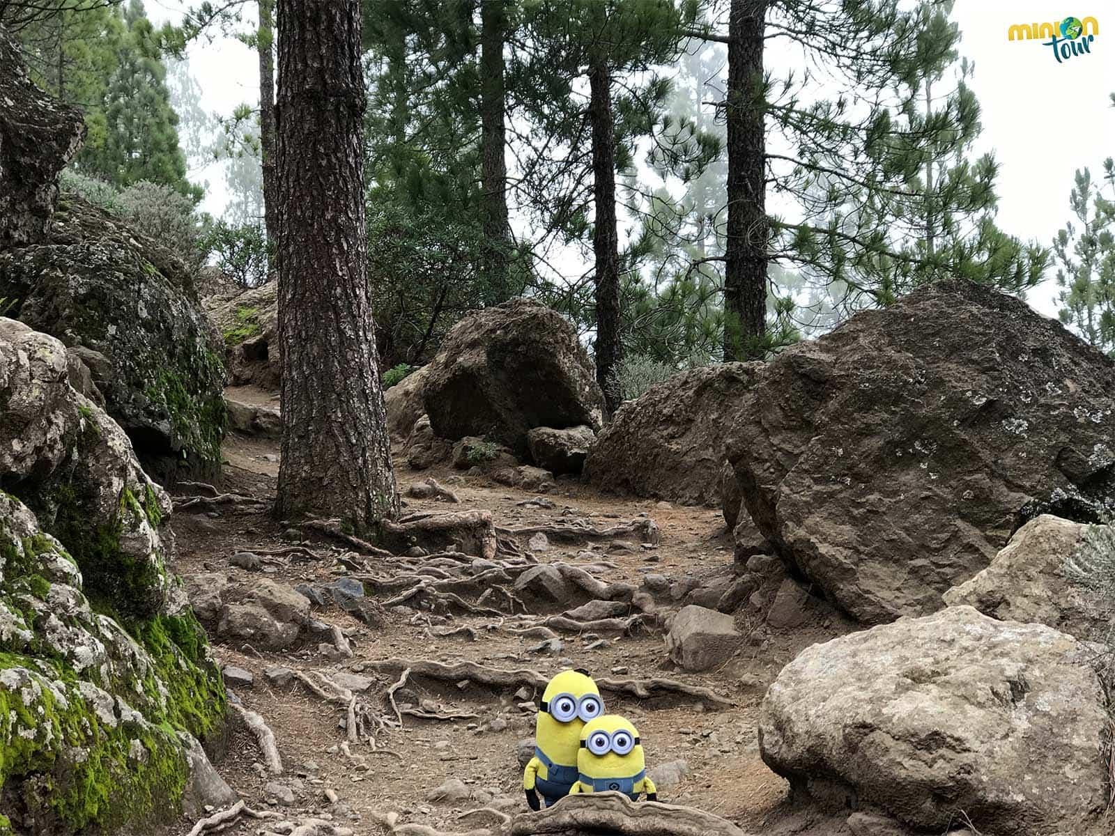 2 Minions de ruta hacia el Roque Nublo