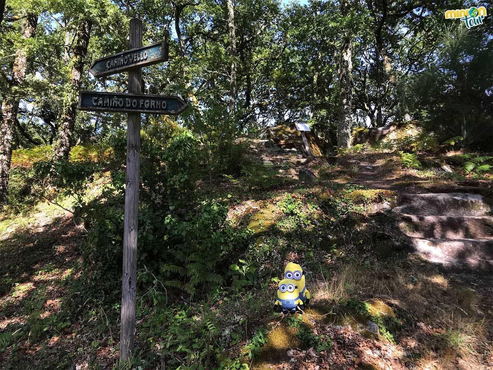 Los alrededores del Monasterio de Santo Estevo de Ribas de Sil