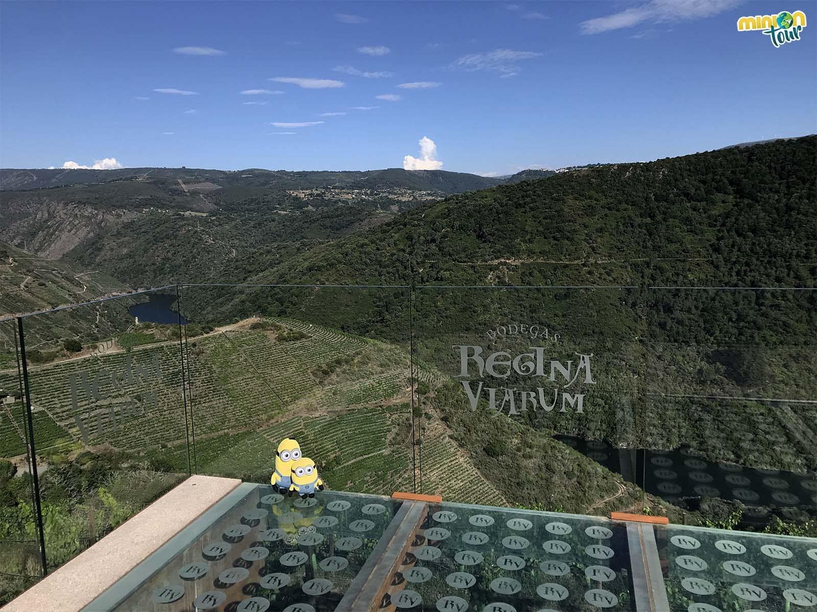 Minions flipando con las vistas de la terraza de las Bodegas Regina Viarum