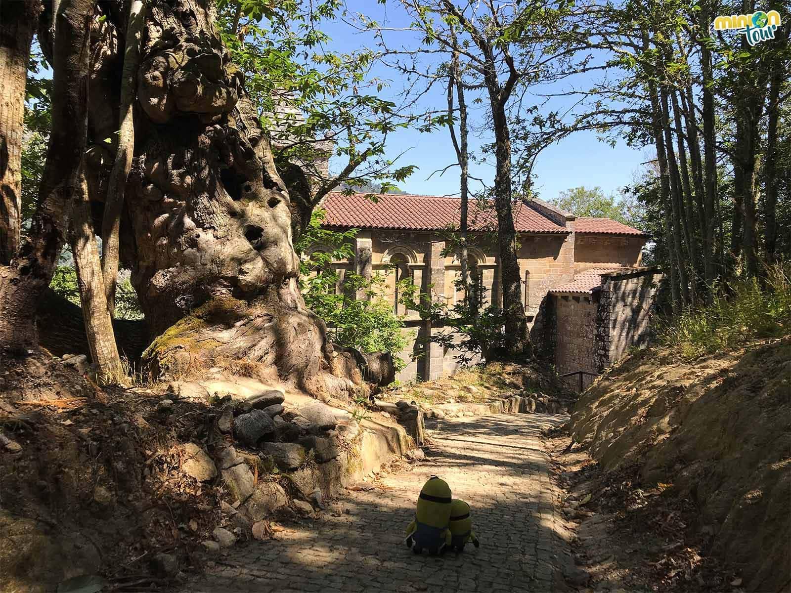 Empezando nuestra visita al Monasterio de Santa Cristina de Ribas de Sil