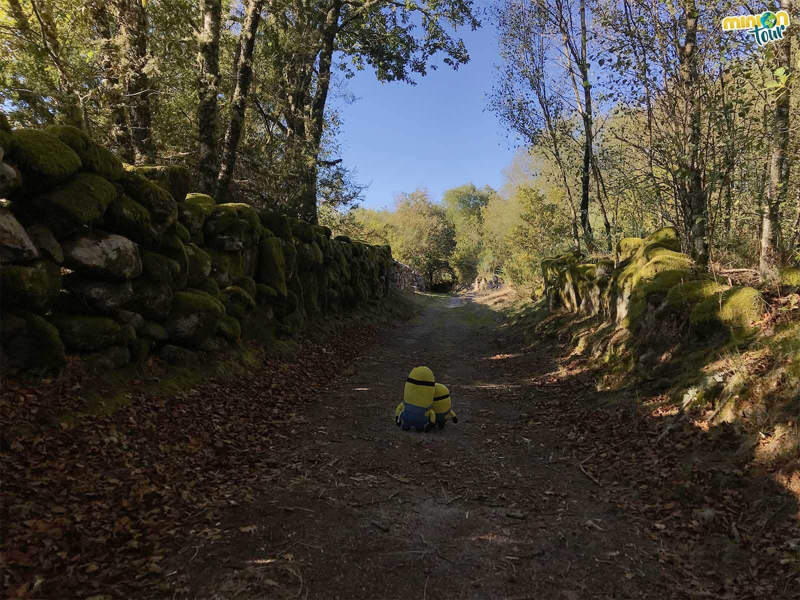 Los Minions por los caminitos chulos del Camino Real