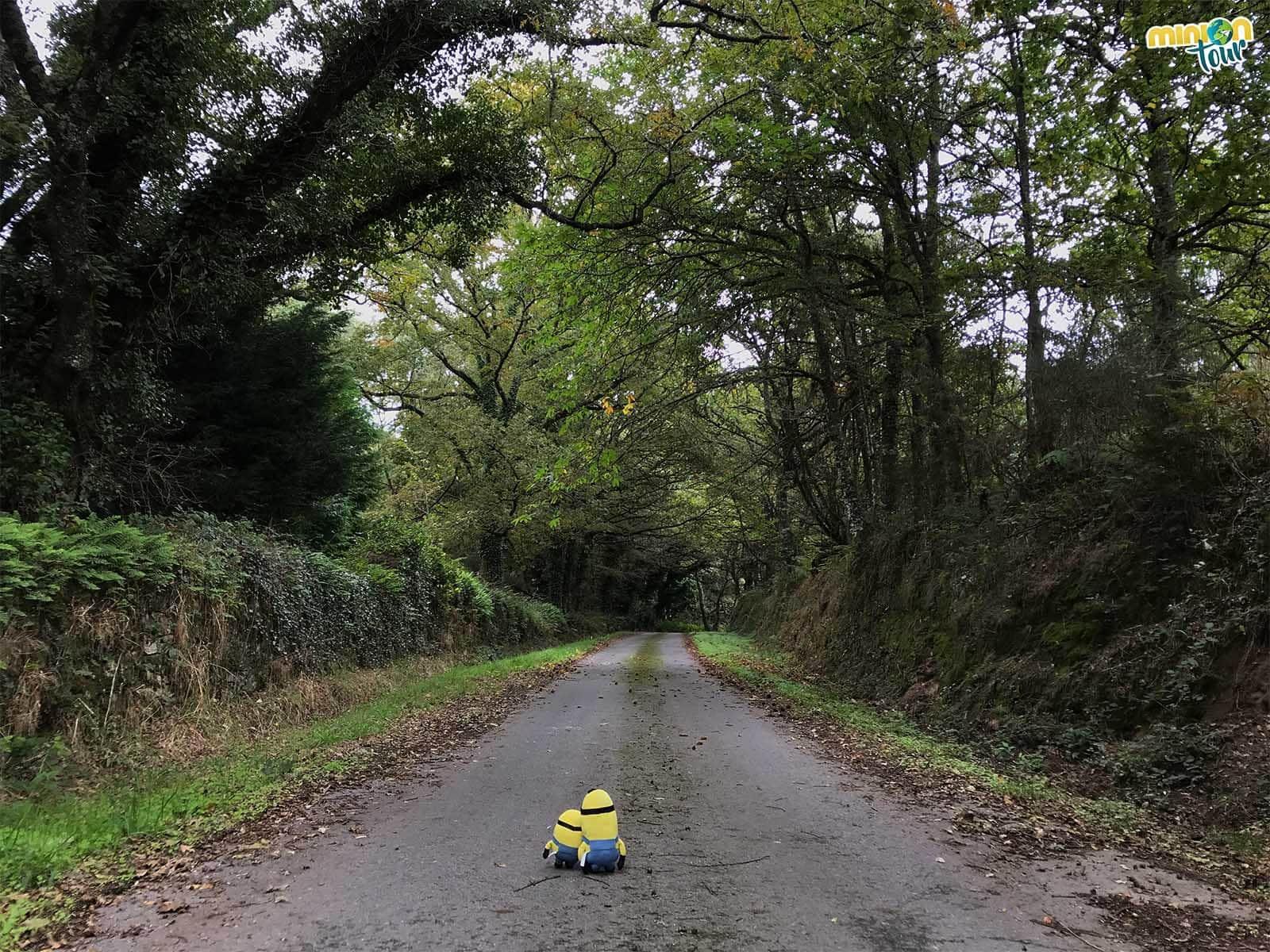 Minions paseando por el Viejo Lugo agrario