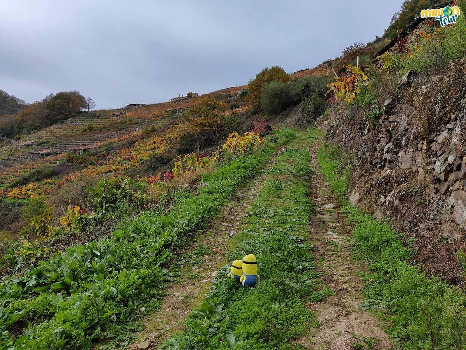 La Ribeira Sacra tiene paisajes de lo más chulos