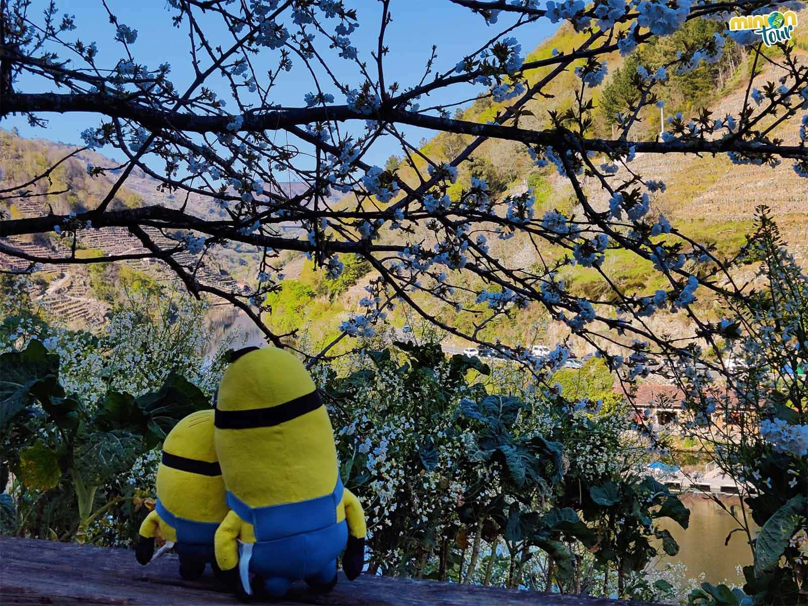 Este sitio también es guay para hacerte una foto con las flores de los cerezos