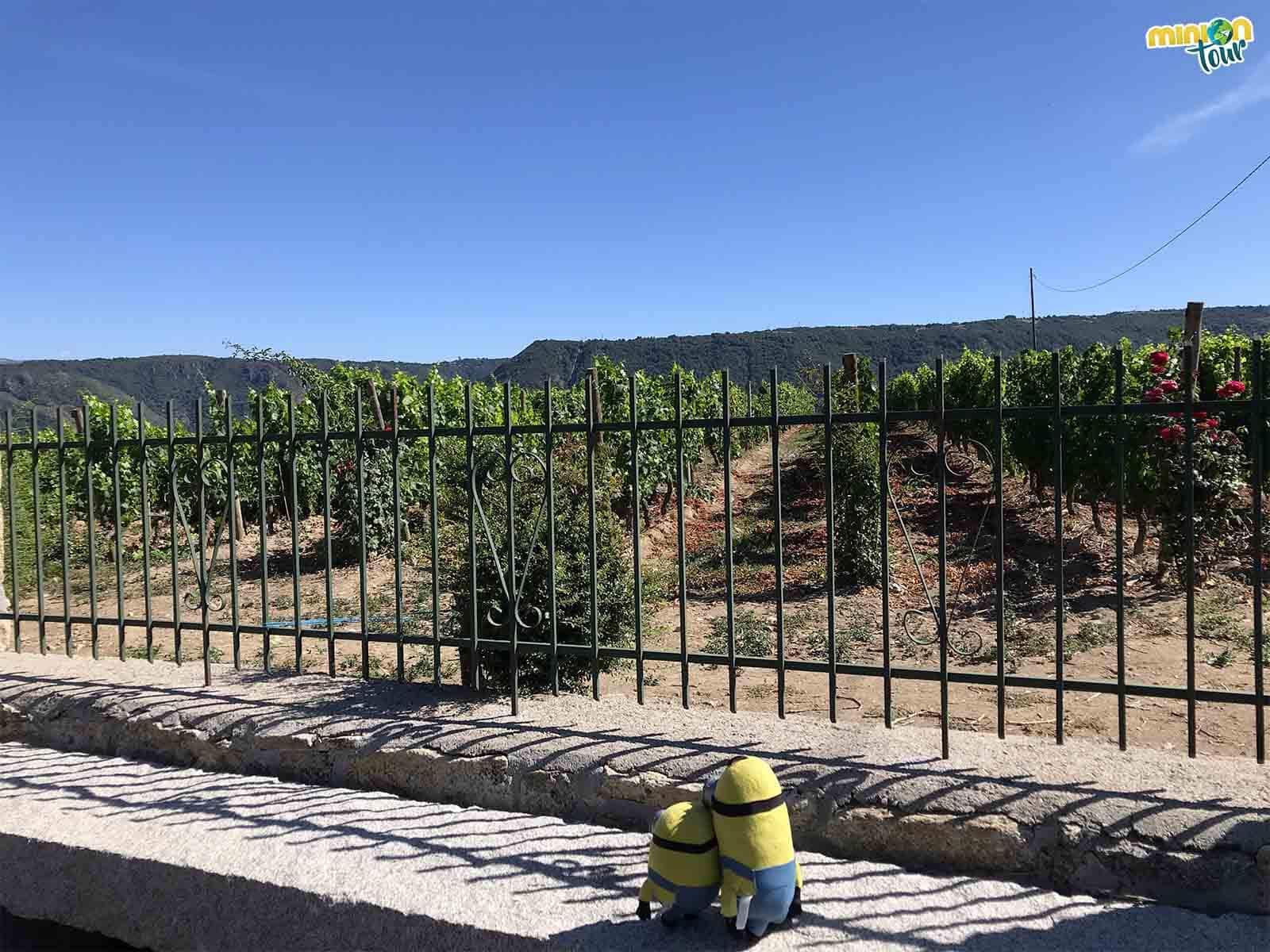 Nos encanta quedarnos mirando los viñedos