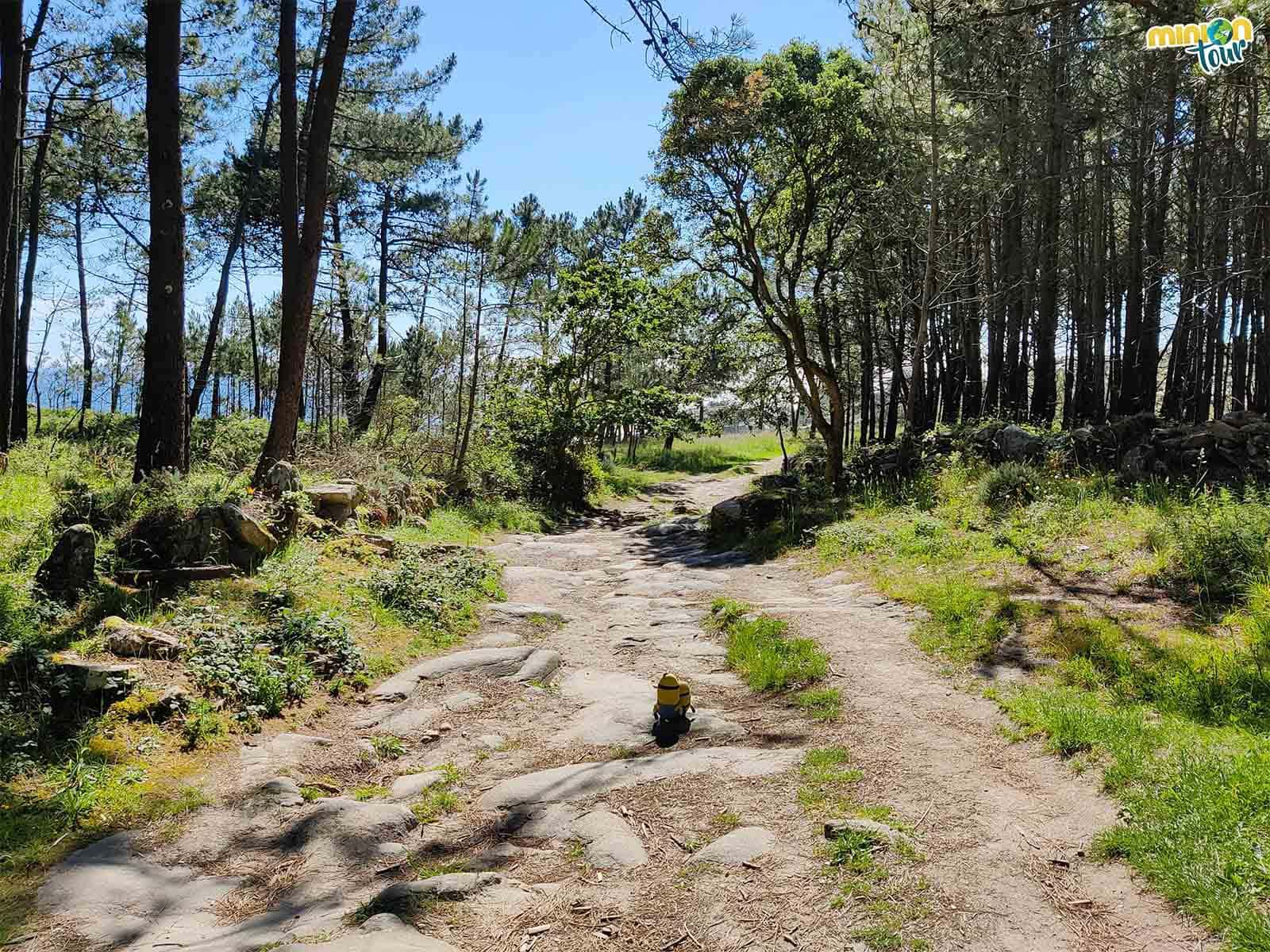 Estamos disfrutando de la ruta hacia el Castro de Baroña