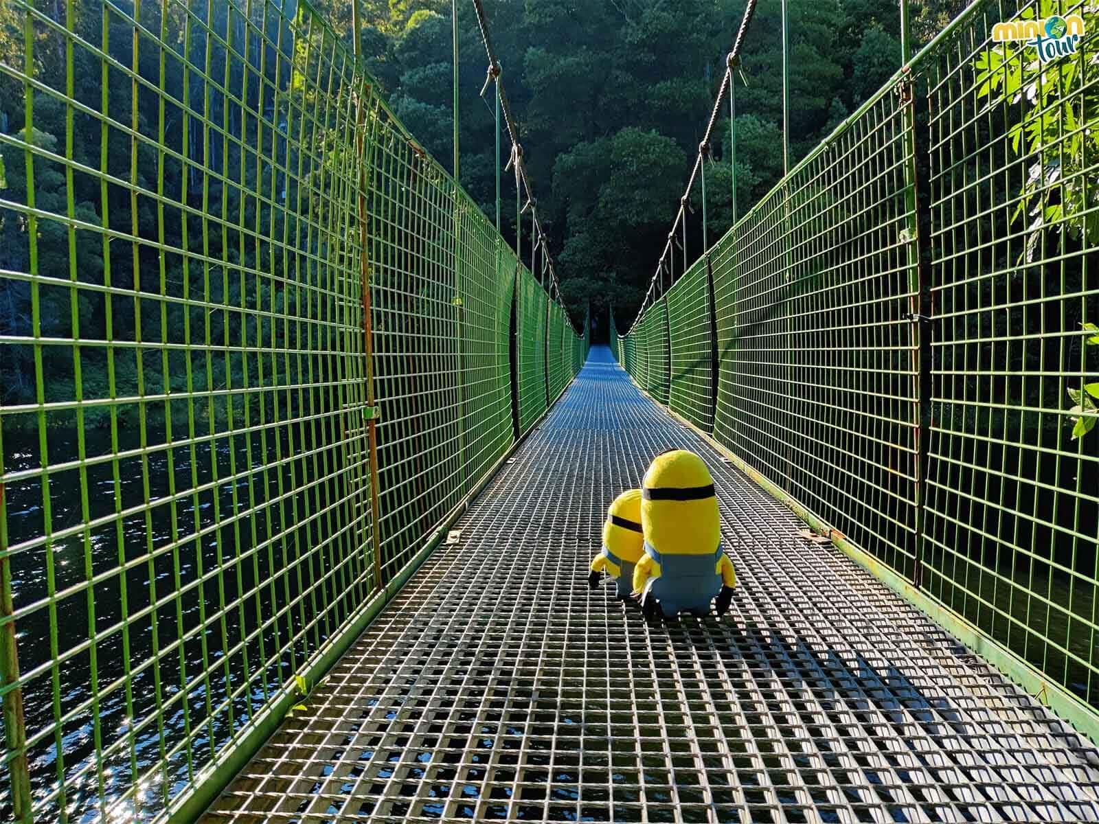Estamos cruzando el puente colgante sobre el río Tambre